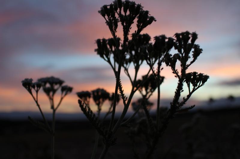 Blüten gegen das Morgenlicht