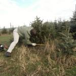 Weihnachtsbaum sägen